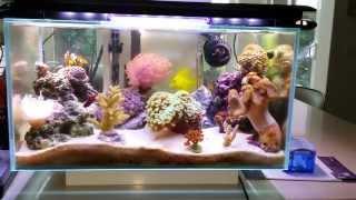 getlinkyoutube.com-Fluval Edge 6 gallon nano saltwater reef fish tank **FULLY PACKED** - Nov 3, 2013