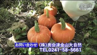 ミニ番組 「金山町 赤かぼちゃ」