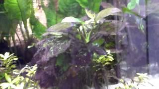 getlinkyoutube.com-HD 二酸化炭素の添加がいらない水草