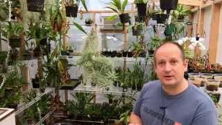getlinkyoutube.com-ALL ABOUT AIR PLANTS: SEED PODS, BABY PLANTS, WINTER CARE AND MORE!