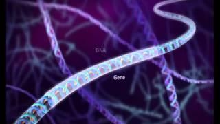 الحمض النووي - التركيب والنسخ والترجمة - DNA