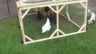 getlinkyoutube.com-How to build a chicken tractor  part 5