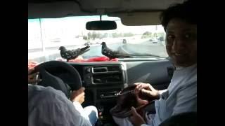 getlinkyoutube.com-Kabootar Baazi   Jeddah