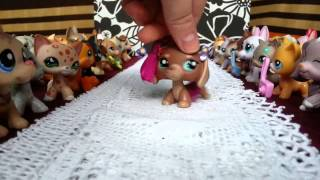 getlinkyoutube.com-LPS : Pokaz Mody Littlest Pet Shop !