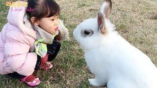 getlinkyoutube.com-선유도 공원에서 깡총깡총 뛰는 아기 토끼 애완동물 키우기 Raising Baby Rabbits Pets Play Игрушки 라임튜브