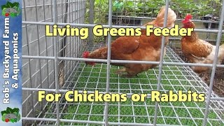 getlinkyoutube.com-Chicken feeder, Living greens feeder for poultry or rabbits...