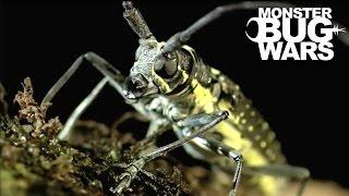 getlinkyoutube.com-Longicorn Beetle vs  Flame Bellied Orb Weaver | MONSTER BUG WARS