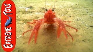 "getlinkyoutube.com-Battleships, Submarines, and Crabs! Adventure ""Exploring San Diego Bay."""