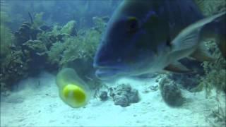 getlinkyoutube.com-จะเกิดอะไรขึ้น เมื่อปลากินไข่ดิบที่ตอกใต้ทะเลแบบสดๆ