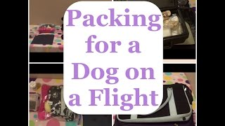 getlinkyoutube.com-Packing for a Dog on a Plane