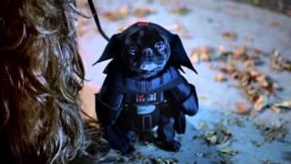getlinkyoutube.com-Verizon Star Wars Halloween commercial