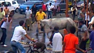 getlinkyoutube.com-Perro pitbull ataca a caballo.