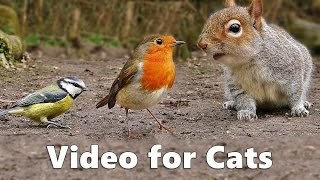 getlinkyoutube.com-Video for Cats to Watch : Squirrels and Birds Extravaganza