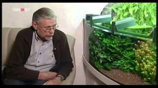 Walther-Aquaristik, Oberflächenabsauger, Düngeplatte, Kahmhaut