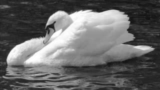 getlinkyoutube.com-Чайковски Лебедово езеро