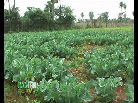 Producción de Verduras y Hortalizas