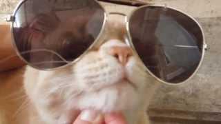 getlinkyoutube.com-¡Oppa Gato Style!