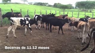 getlinkyoutube.com-HACIENDA CHUMECA, Santiago Rodríguez, República Dominicana