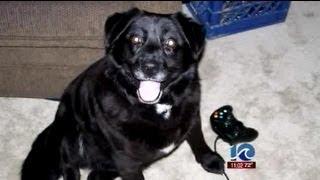 getlinkyoutube.com-Suffolk man beats own dog to death