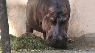 getlinkyoutube.com-Surat Sarthana Nature Park Zoo