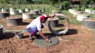 getlinkyoutube.com-วิธีปลูกมะนาววงบ่อ