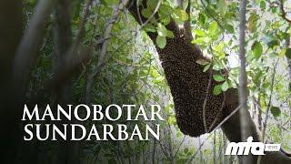 Manobotar Sundarban