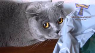 Cute cats feel guilty - Funny guilty cat compilation Tips
