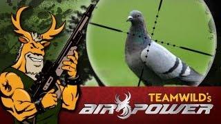 getlinkyoutube.com-Airgun Hunting: Pigeon Hunt with the Benjamin Marauder