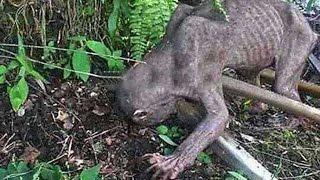 getlinkyoutube.com-La verdad tras la extraña criatura capturada en un video