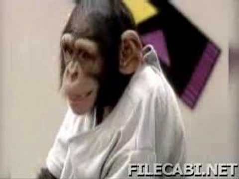 kissing monkeys(very funny)