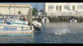 "getlinkyoutube.com-Stone Harbor 2009 ""The Video"""