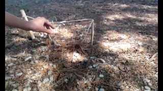 Download video trampa para capturar conejos vivos - Trampas para ratones vivos ...