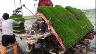 getlinkyoutube.com-زراعة الارز في كوكب اليابان