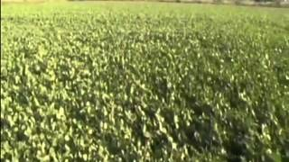 getlinkyoutube.com-Annadata: Know about mung bean production and sugarcane management