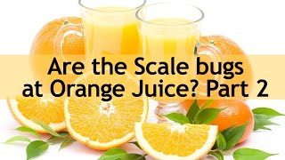 Kashrut Alert - Are the Scale bugs at Orange Juice Part 2