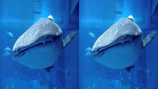 getlinkyoutube.com-Sony Aquarium 3D SBS