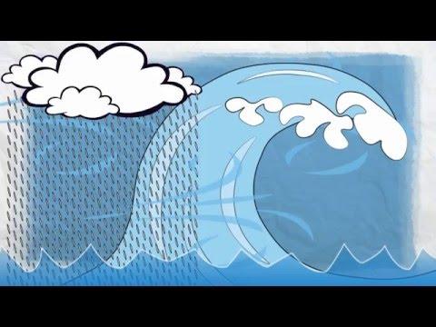 Water Damage Basics