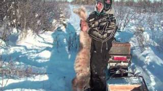 getlinkyoutube.com-Trapping In The Wild North 01