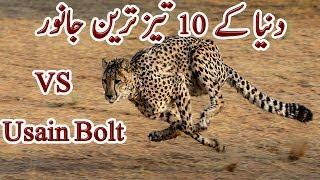Fastest Animals in World | دنیا کے ۱۰ تیز ترین جانور