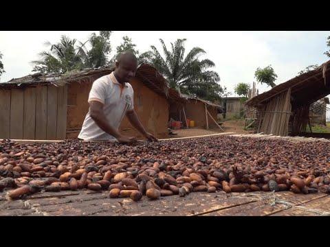 Document 12 : La deuxième transformation du cacao pour améliorer les revenus des producteurs en Côte d'Ivoire