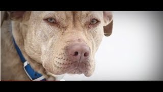 getlinkyoutube.com-A Look Back: 100 Dogs Rescued from Freezing Blizzard by ASPCA