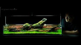 getlinkyoutube.com-Aquarium Aquascape Tutorial Guide 'Crimson Sky' by James Findley & The Green Machine