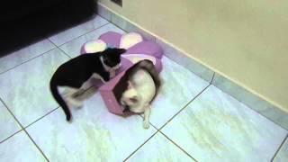 getlinkyoutube.com-Gatinhos brigando pela caixa