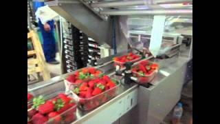 """getlinkyoutube.com-Γραμμή Συσκευασίας Φράουλας σε """"Flow Pack""""- Strawberries Packing Line """"Flow Pack""""_Novatec"""