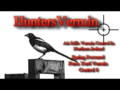 Air Rifle Hunting, Spring Powered Farm Yard Vermin Control 8