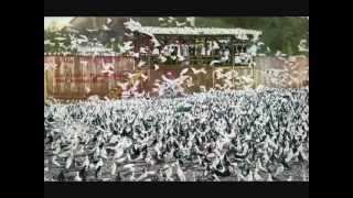 getlinkyoutube.com-Largest Pigeon Farm In The World /  WWW.PigeonBreed.Com