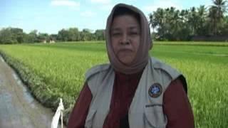 IGTF 2012 - Petani Sudah Terapkan Konsep PHT Kab  Klaten