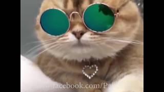 lag de lahore de aa - Guru Randhawa ( Funny Video ) width=