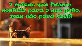getlinkyoutube.com-7 coisas que fazem sentido para o seu gato, mas não para você! #27