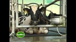 getlinkyoutube.com-Story of Ksheeradhara Award Winner : Riju K Poulose - Choice Dairy farm